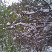 Первый снег :: марина ковшова
