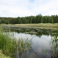 На озере :: Ольга Кузьмина