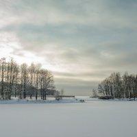Снежный ноябрь 7 :: Виталий