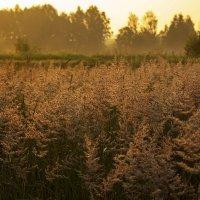 Травы :: Александр