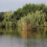 "База отдыха ""Тихая гавань"" :: Олег Афанасьевич Сергеев"