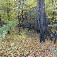 Осень обнажила речушку в глубине оврага :: Маргарита Батырева