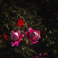 Цветы :: Ksyusha Pav