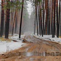 И в ноябре бывает март... :: Лесо-Вед (Баранов)