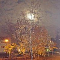 Луна, луна....))14.11.2016 :: Galina Dzubina
