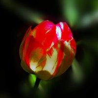 Весна глянулась... :: Юрий