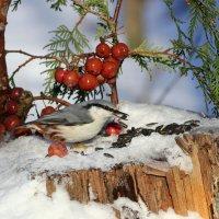 Птичкам на радость :: Ната Волга