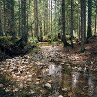 Заколдованный лес :: Игорь Иванов