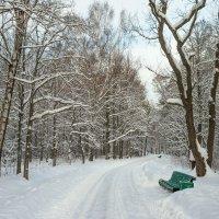 Снежный ноябрь 15 :: Виталий
