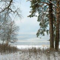 Снежный ноябрь 11 :: Виталий