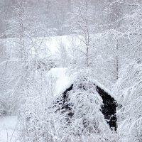 Зима :: Андрей Скорняков
