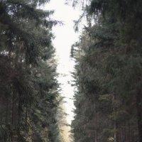 дороги бывают разные... :: Марина Макухина