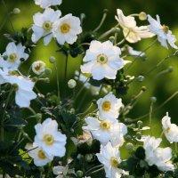 цветочные истории-городские цветы :: Олег Лукьянов