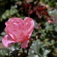 Цветок :: Елена