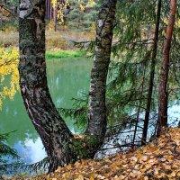 Осень наступила. :: Николай Крюков