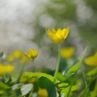 """Скоро весна, скоро весна, ..."" :: Елена Ахромеева"