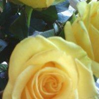 Розы на подоконнике... :: марина ковшова