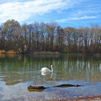 Ноябрь кончается: прозрачен, легок, светел... :: Galina Dzubina
