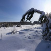 Околдован лес стоит, чудной жизнью он блестит 7 :: Сергей Жуков