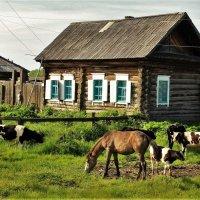 Утро в селе :: Сергей Чиняев