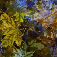 Кленовая осень :: Кристина @BeshenBelka