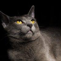 немого о кошках 2 :: alexzonder