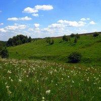 Летним днём. :: оля san-alondra