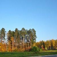Осеннии краски в городе моем... :: Лидия (naum.lidiya)