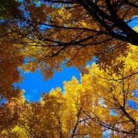 Осень в парке :: Евгений Замковой