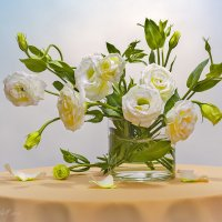 Белые цветы :: Светлана Л.