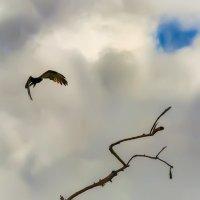 птицы вещие поют,да все из сказок... :: svabboy photo