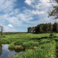 Река Лопасня и окрестности :: Владимир Безбородов