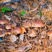 """""""Ребята пошли в лес за грибами и остались там на дискотеку"""" :: Роман Захватошин"""
