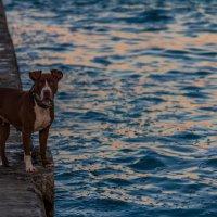 Пес и море :: Artem Zelenyuk