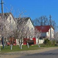 весна на улице :: оксана