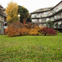Осень по Итальянски :: Dmytro Seleznov