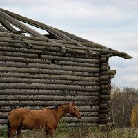 Barn and horse :: Виталий Устинов
