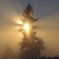 В солнечном сиянии :: Геннадий Г.