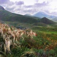 Ветер нежно колышет пряди ковыли... :: viton