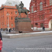 Бездомные собачки позируют на Красной площади :: Татьяна Помогалова