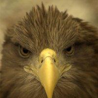 Очень серьезная птичка :: Максим Кирютин