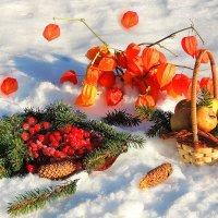Красные ягоды на снегу..... :: Павлова Татьяна Павлова