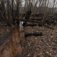 малые реки... :: Михаил Жуковский