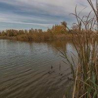 Осеннее озеро. :: Сергей Исаенко