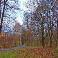 Дождливый ноябрьский день... :: Galina Dzubina