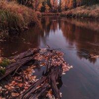 Ямальская осень :: Taras Romanishin