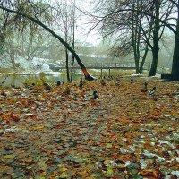 Поздняя осень :: Evgenij Schleinikov