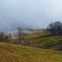 солнце и туман :: Elena Wymann