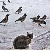 На снегу пасутся кто?! Правильно... :: Алексей Бубнов