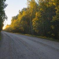 Дорога на рассвете :: Федор Пшеничный